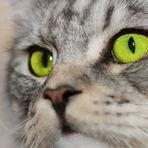 Grüne Augen