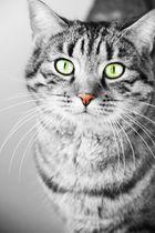 Grüne Augen - Rote Nase