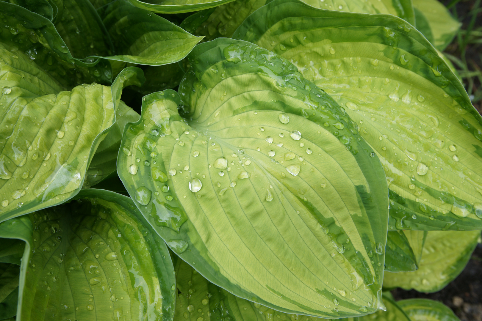 Grüne Beruhigung