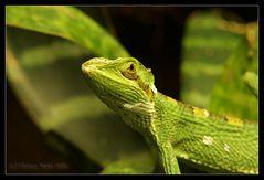 grüne blicke