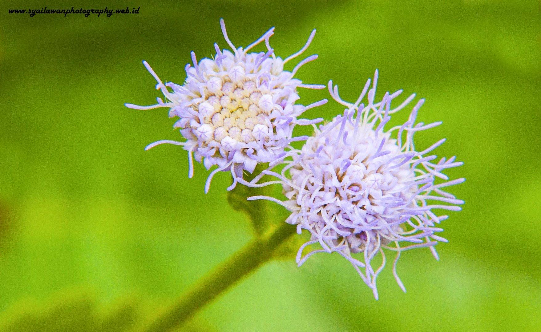 Grüne Blume