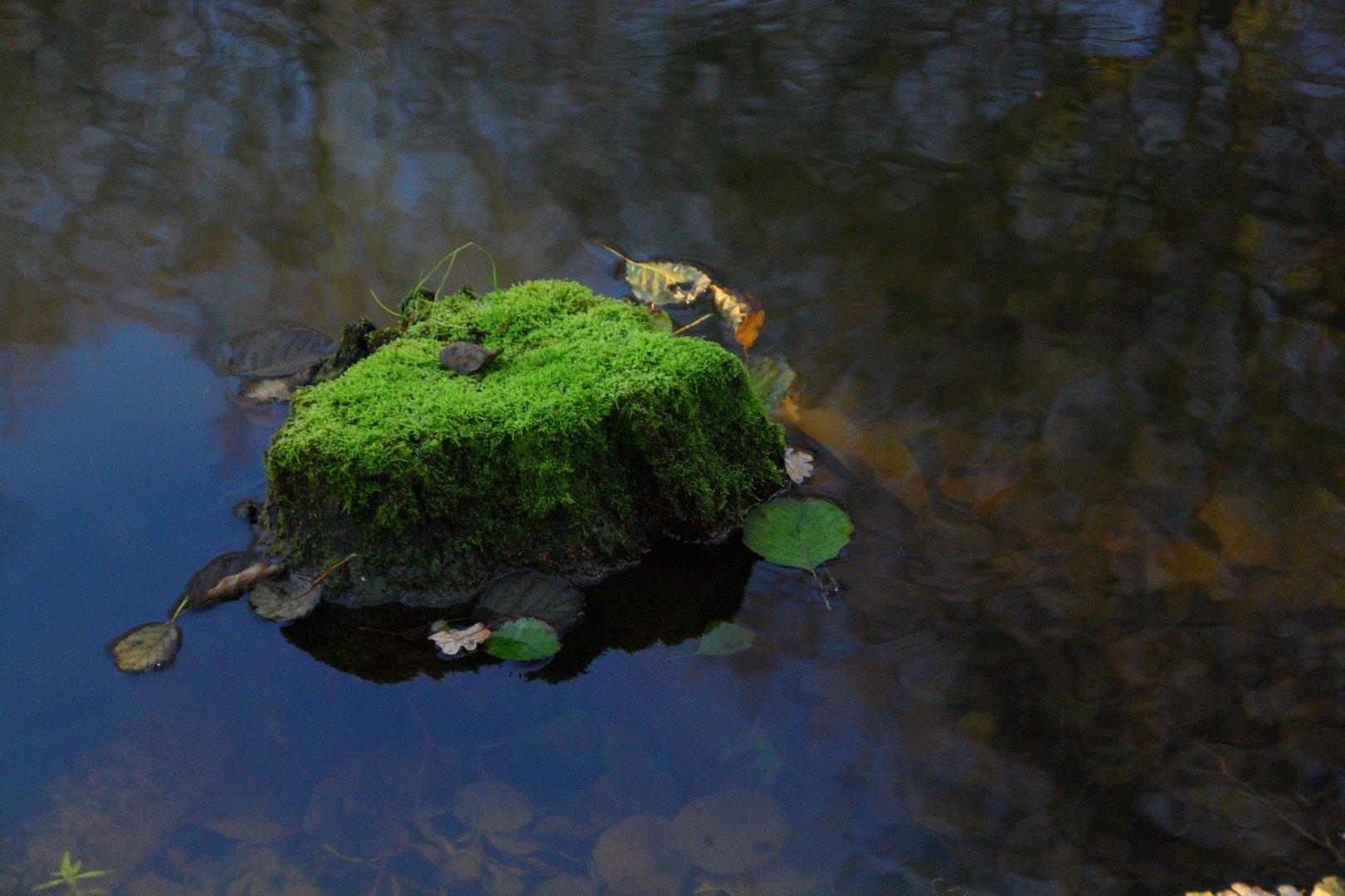 Grüne Insel