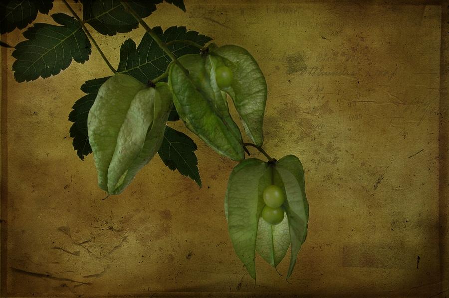 Grüne Lampions