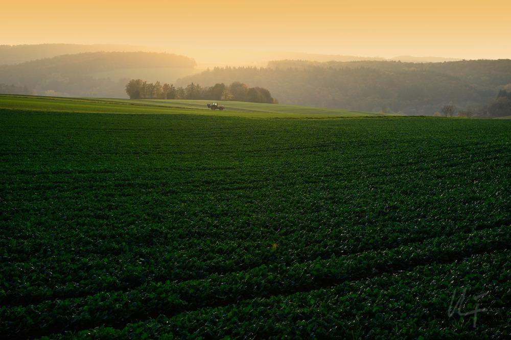 grüne Landschaft mit Traktor...