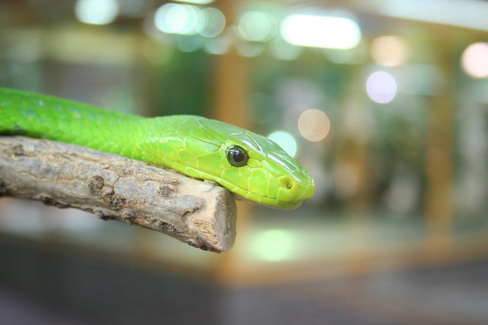 Grüne Mamba 2