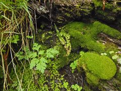Grüne Mooswelten...