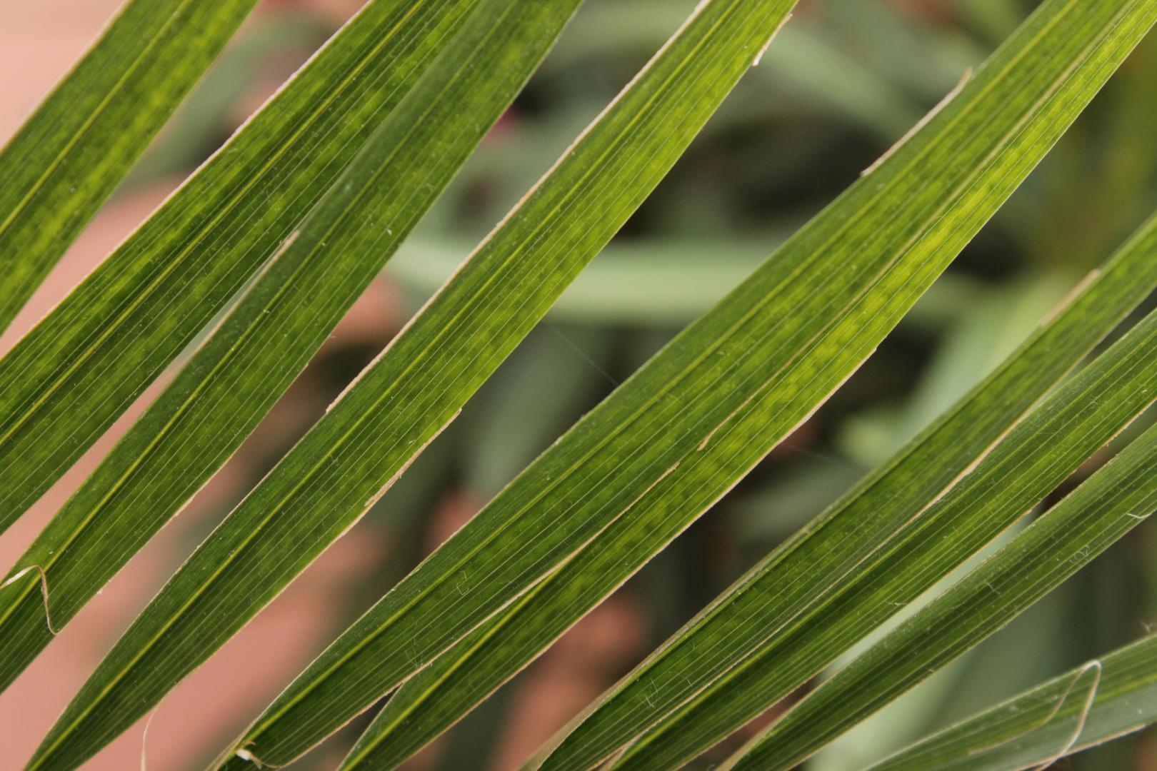 Inspirierend Grüne Pflanzen Galerie Von Grüne Pflanze
