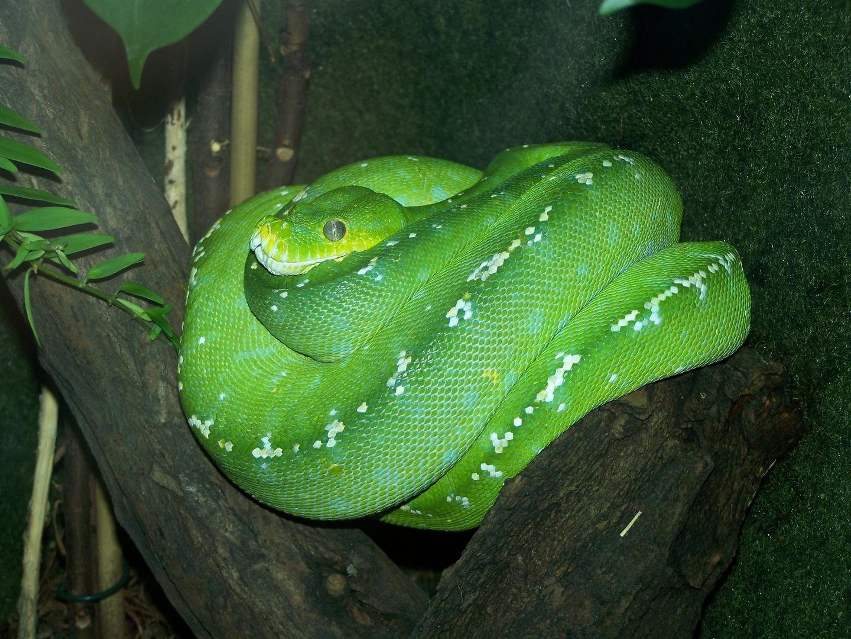 Grüne Schlangen sind schön.