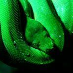 Grüne Schönheit....