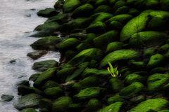 Grüne Steine