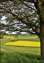 Grüne und gelbe Felder im Abendlicht ...