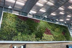 Grüne Wand im Airport