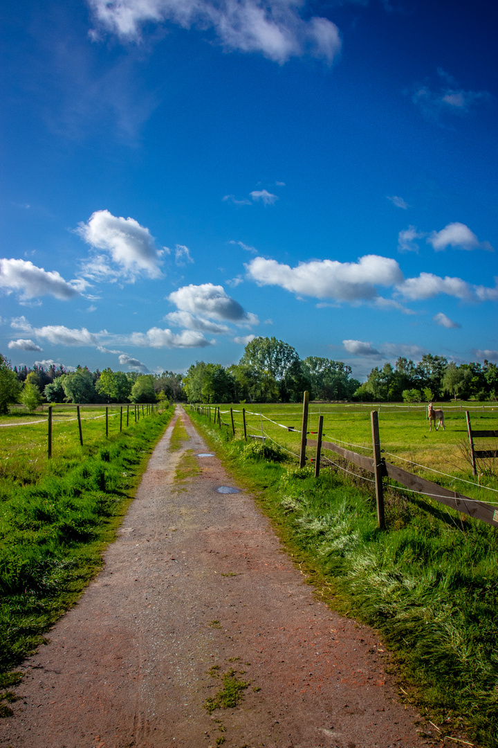 Grüne Wiese Blauer Himmel