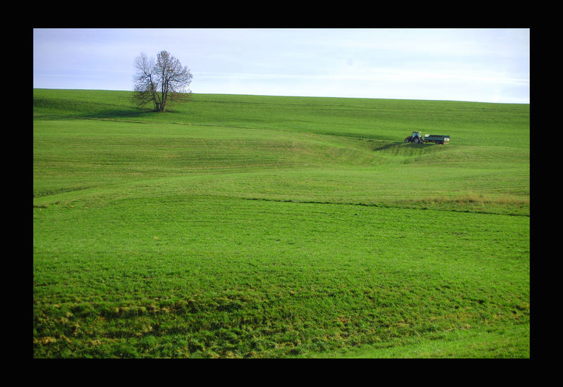 grüne Wiese / Schafmatt mit Traktor