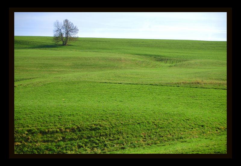 grüne Wiese / Schafmatt ohne Traktor