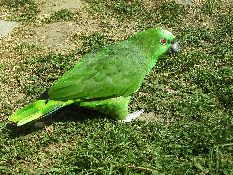 Grüner als grün..;-) unser Roceli