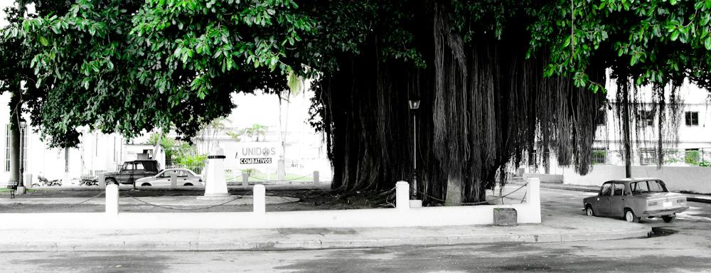 Grüner Baum, Kuba (2008)