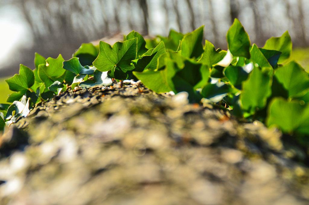 Grüner Bogen