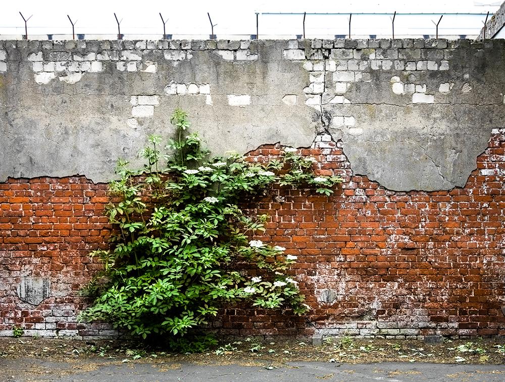 Grüner Busch vor Mauerwerk