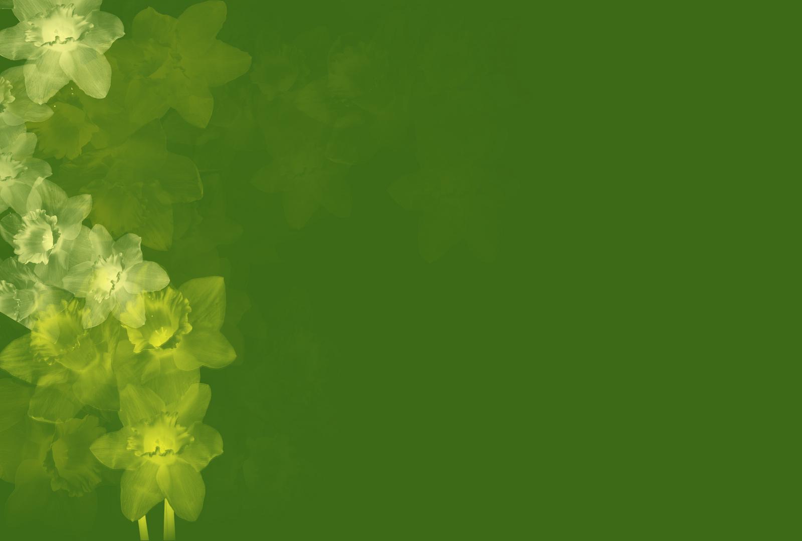 Grüner Frühlingsgruß
