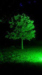 Grüner geht es nicht