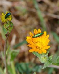 Grüner Käfer unscharf !!!