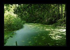 Grüner Tümpel