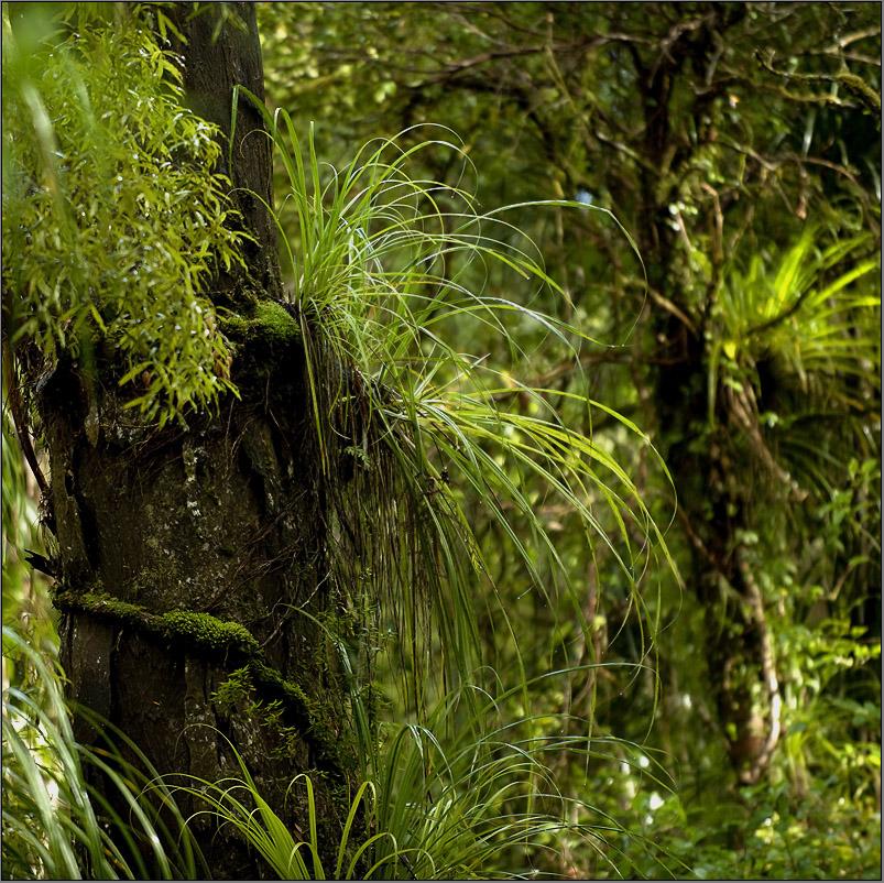 grünes blättergewirr