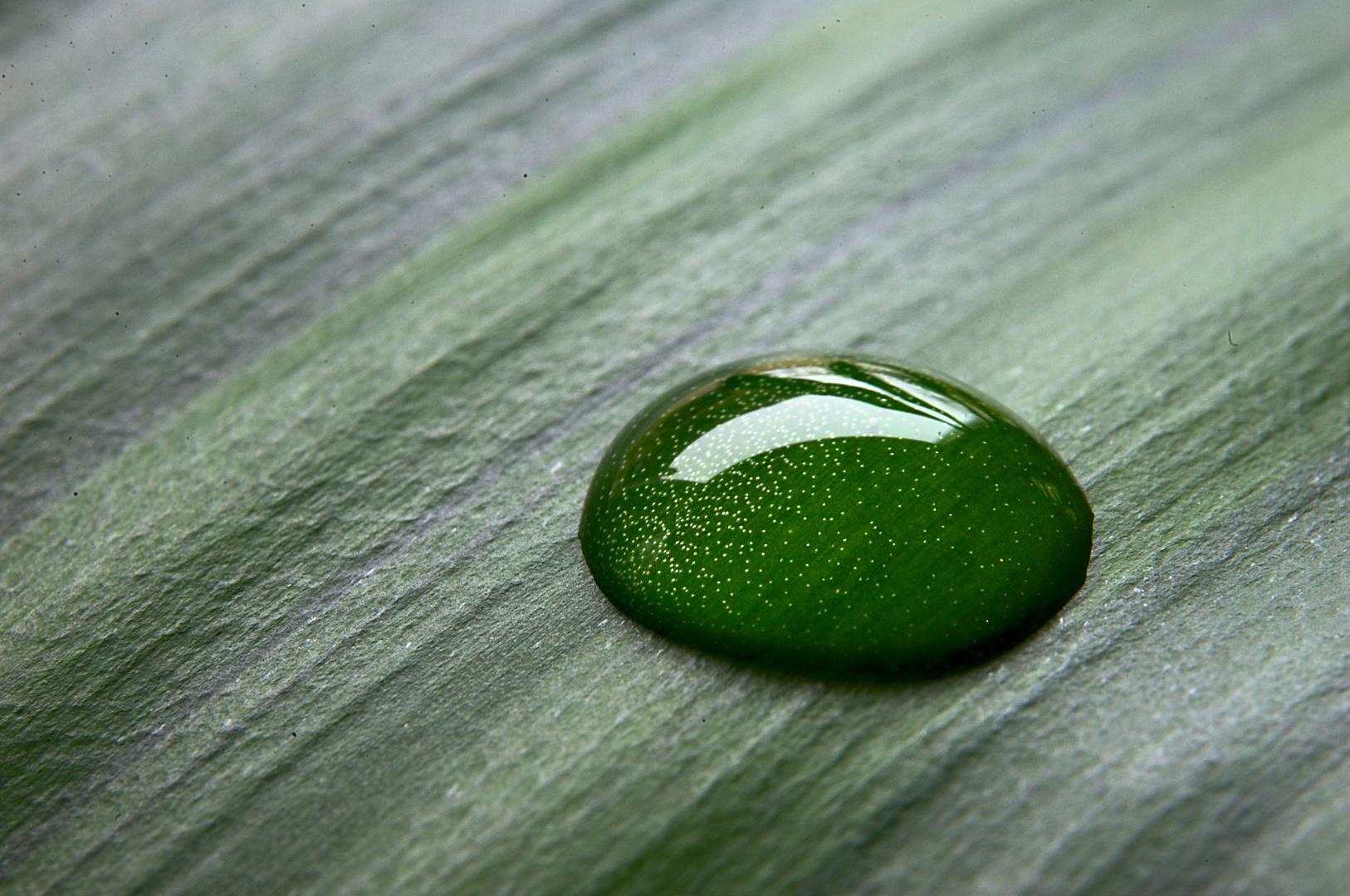 -Grünes Leben-