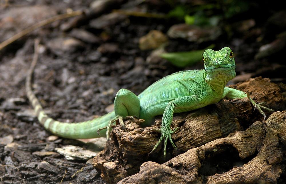 Grünes Männchen vom Mars
