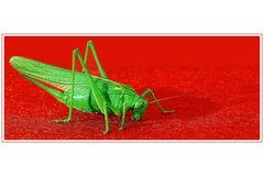 Grünes Rotes Heupferd III