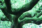 grünes Ungetüm