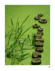 Grünes Wasser an der Havel