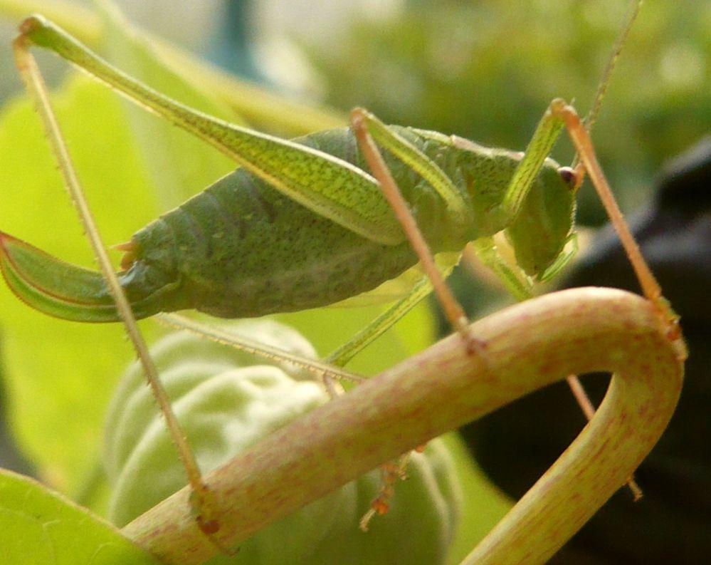 Grünes Wesen