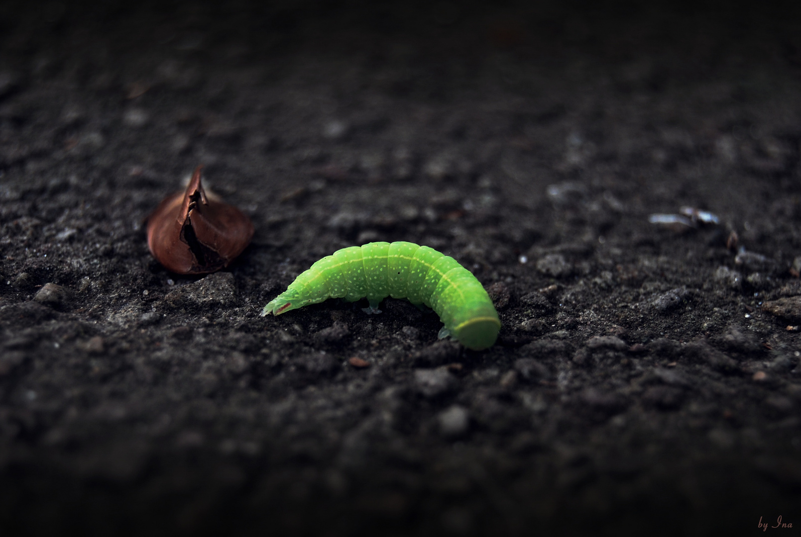 ^ grünes Würmchen ^