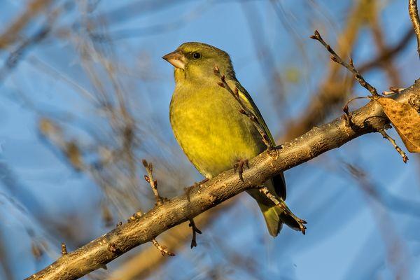 Finkenvögel Fotos Bilder Auf Fotocommunity