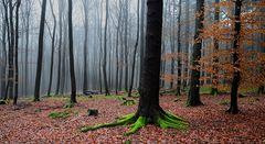 Grünfußbäume