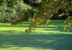Grüngoldenes Wasser.
