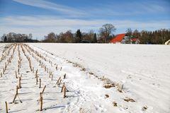 Grünkohlfeld nach dem zweiten Frost