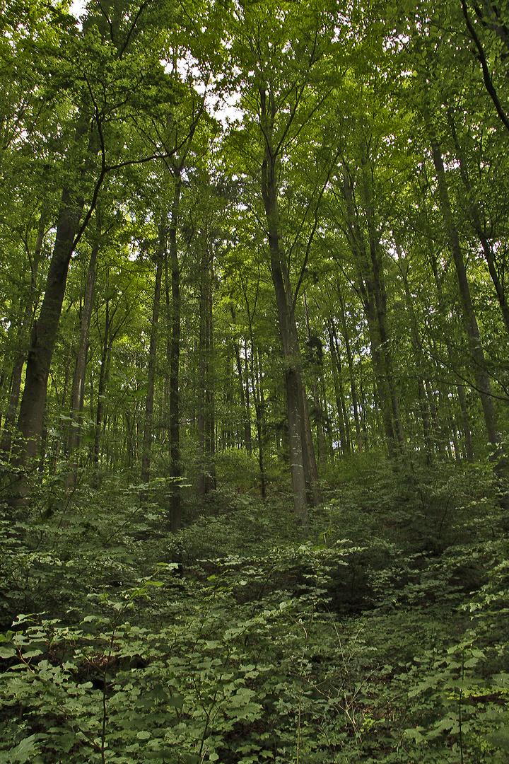 grünwalde