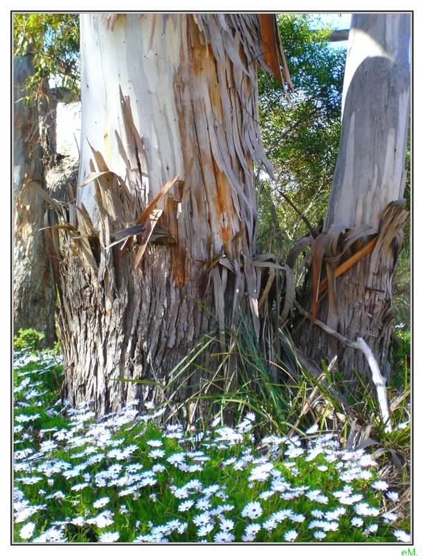 grüße aus tasmanien
