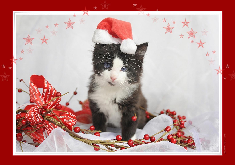 Grüsse Vom Nikolaus Foto Bild Karten Und Kalender