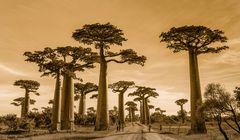 Grüße von der Baobab Allee