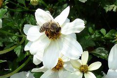 Gruga Essen - Biene auf der Blütensäule