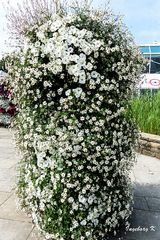 Gruga Essen - Blumensäule -