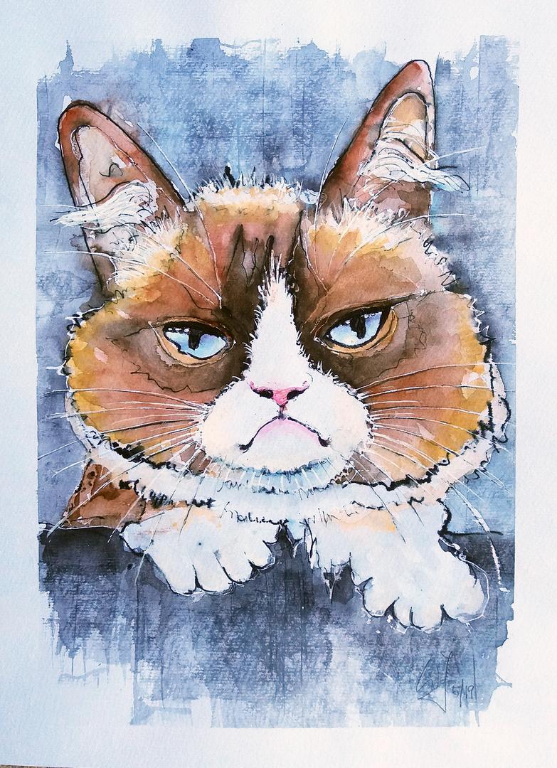 Grumpy cat ...1