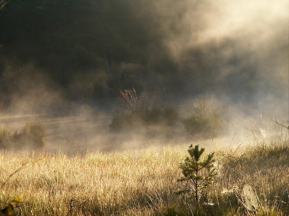 Grundloses Moor