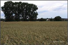 Gruppenbild mit  Weizen ;-)