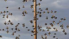 Gruppenflug