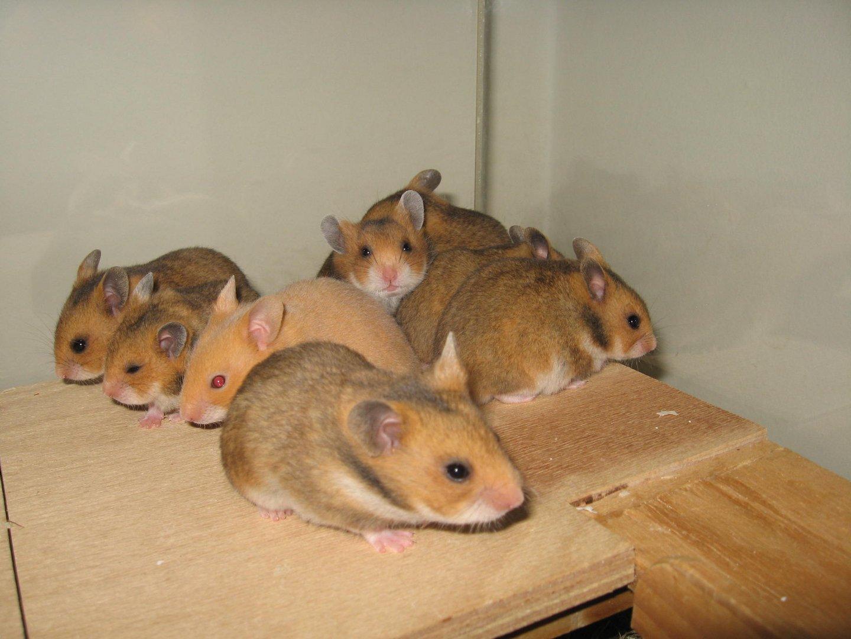 Gruppenfoto von Mayas Babys